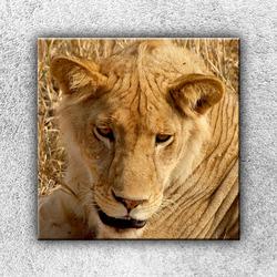 Foto na plátno Lvice 1 70x70 cm