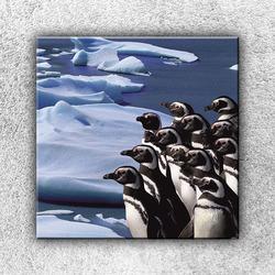 Foto na plátno Skupina tučňáků 1 70x70 cm