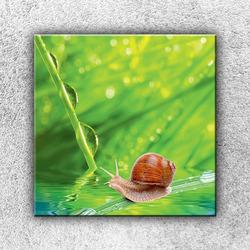 Foto na plátno Šnek 70x70 cm