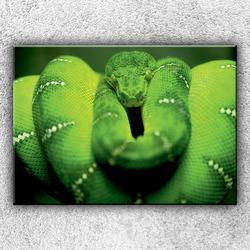 Foto na plátno Zelený stočený had 1 70x50 cm
