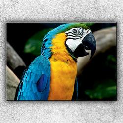 Foto na plátno Modrý papoušek ara 70x50 cm