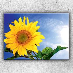 Foto na plátno Slunečnice 3 70x50 cm