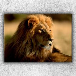 Foto na plátno Pohled lva 2 70x50 cm
