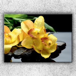Foto na plátno Žlutá orchidej na kamenech 2 70x50 cm