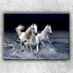 Foto na plátno Divocí koně 1 70x50 cm