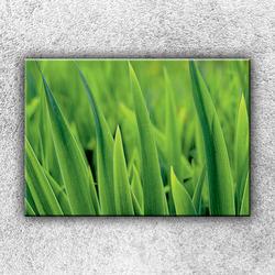 Foto na plátno Stébla trávy 50x35 cm