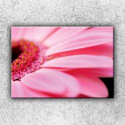 Foto na plátno Růžová gerbera 50x35 cm