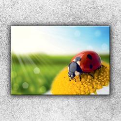 Foto na plátno Beruška na heřmánku 2 50x35 cm