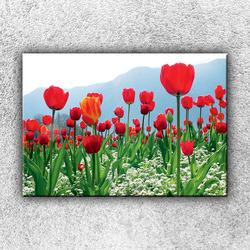 Foto na plátno Rudé tulipány 1 50x35 cm