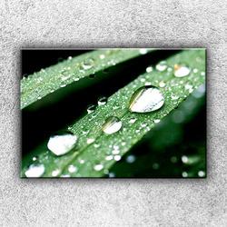 Foto na plátno Rosa na stéblu trávy 1 50x35 cm
