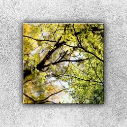 Foto na plátno V koruně stromu 1 30x30 cm