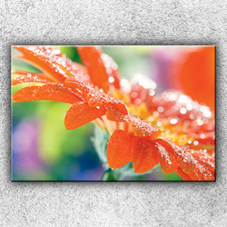 Foto na plátno Květ s rosou 120x80 cm