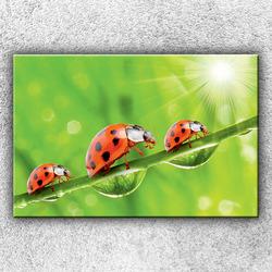 Foto na plátno Tři berušky 120x80 cm