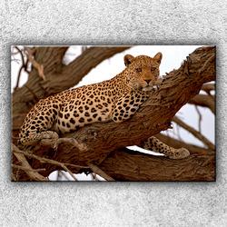 Foto na plátno Gepard na stromě 120x80 cm