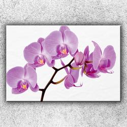 Foto na plátno Fialová orchidej 120x80 cm