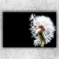 Foto na plátno Chmýří pampelišek 3 120x80 cm