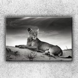 Foto na plátno Ležící lev 1 120x80 cm