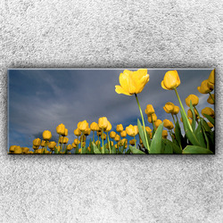 Foto na plátno Pole žlutých tulipánů 1 120x50 cm