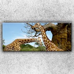 Foto na plátno Žirafí pár 1 120x50 cm