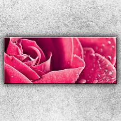 Foto na plátno Růžová růže 2 120x50 cm