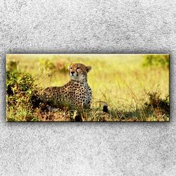 Foto na plátno Gepard v pozoru 1 120x50 cm