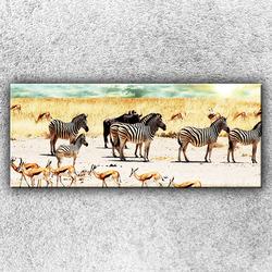 Foto na plátno Zebry na safari 120x50 cm
