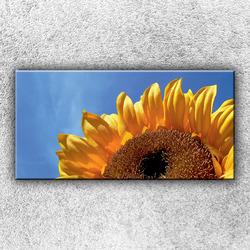 Foto na plátno Slunečnice 100x50 cm