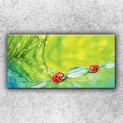 Foto na plátno Berušky 100x50 cm