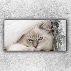 Foto na plátno Modrooká kočka 100x50 cm