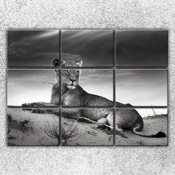 Foto na plátno Ležící lvice 210x150 cm