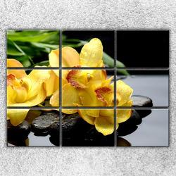 Foto na plátno Žluté orchideje na kamenech 2 210x150 cm