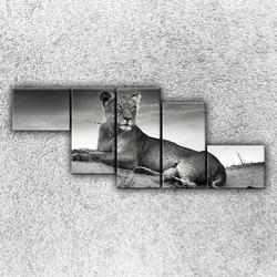 Foto na plátno Ležící lev 4 170x70 cm