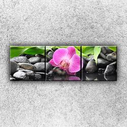 Foto na plátno Růžová orchidej 1 120x40 cm