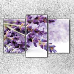 Foto na plátno Kytka fialová 75x50 cm