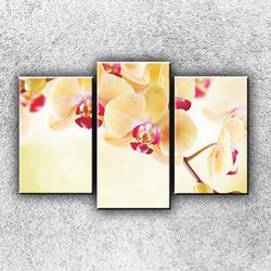 Foto na plátno Žluté orchideje 75x50 cm