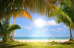 Plakát Palmy na pláži
