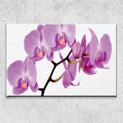 Foto na plátně Fialová orchidej 90x60 cm
