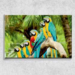 Foto na plátně Papoušci 90x60 cm