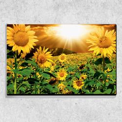 Foto na plátně Slunečnice 90x60 cm