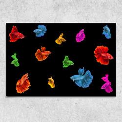 Foto na plátně Barevné rybky 90x60 cm