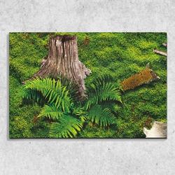 Foto na plátně Mech 90x60 cm