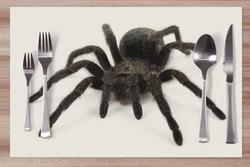 Prostírání Pavouk 42x28 cm