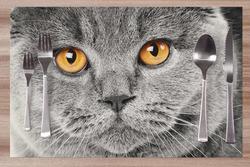 Prostírání Kočičí pohled 42x28 cm