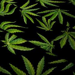 Nepromokavá tkanina – Cannabis