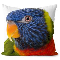 Polštář Barevný papoušek