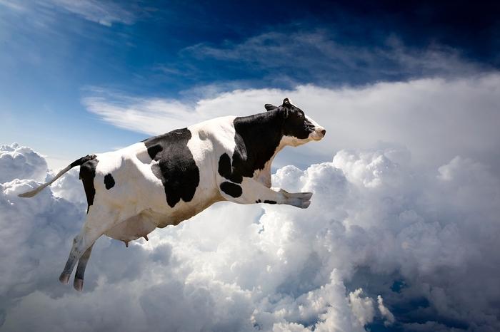 Plakát Letící kráva (Velikost: 10 x 4 cm)