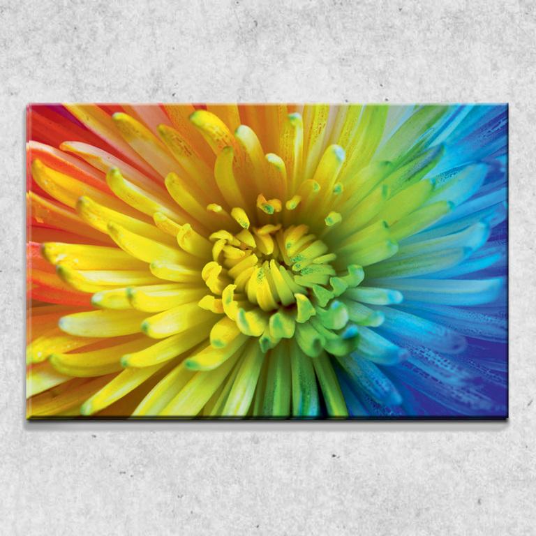 Foto na plátně Duhový květ 90x60 cm