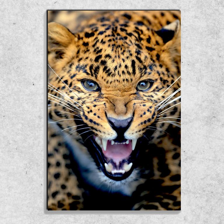 Foto na plátně Gepardí řev 90x60 cm